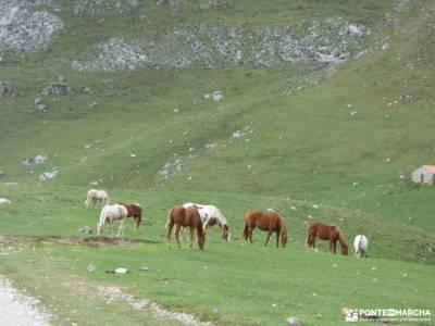 Corazón de Picos de Europa;camino de los faros centenera cabeza de hierro definicion de montaña is